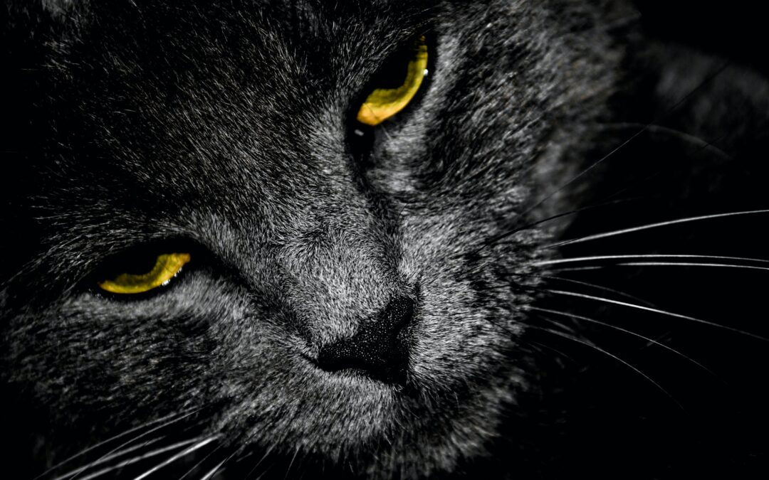Five never-proved superstitions that are still widely believed
